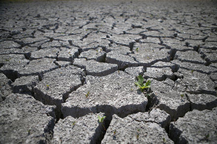 Sinistre sécheresse